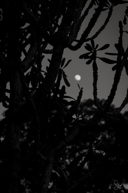 20131115-jrl_moon_012