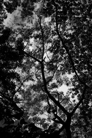 a leaf canopy