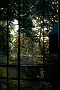 Early morning light spills through the trees and into the building.